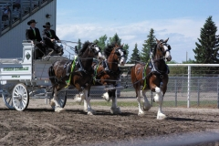 Riverside Clydesdales