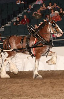 Tack & Equipment | Wild Rose Draft Horse Association