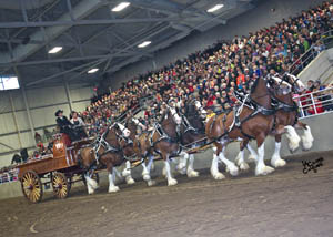 Carson Farms and Auction, World Clydesdale Six Horse Hitch